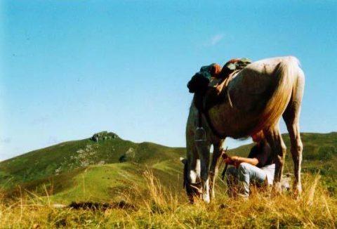 Local ranch du Barrez